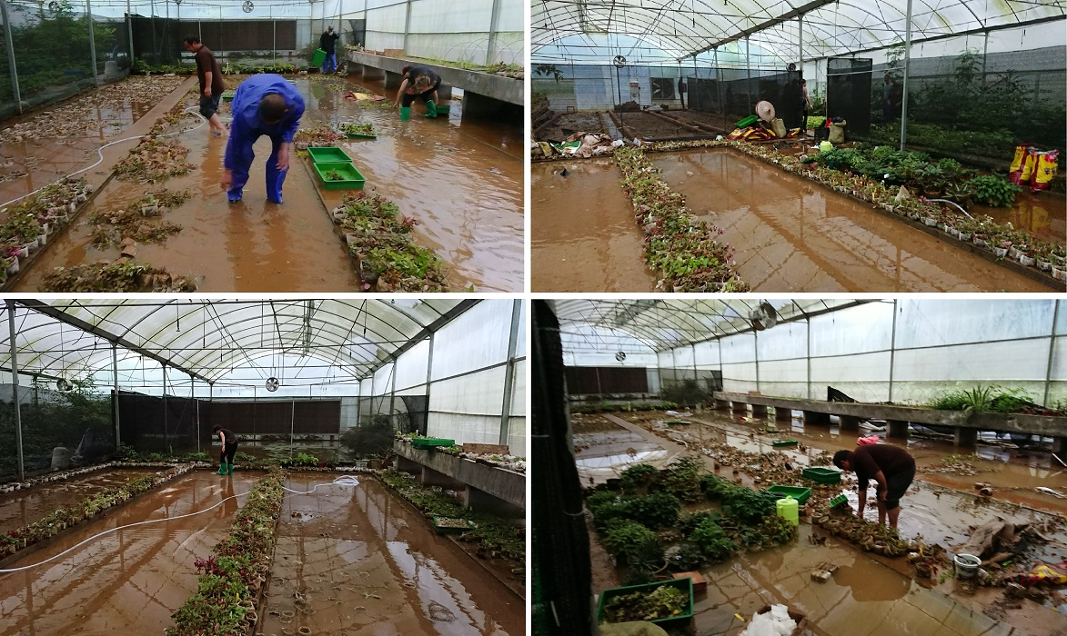 The conservation Nursery of GCCC was hit and nearly destroyed by a terrible flood at 1st July