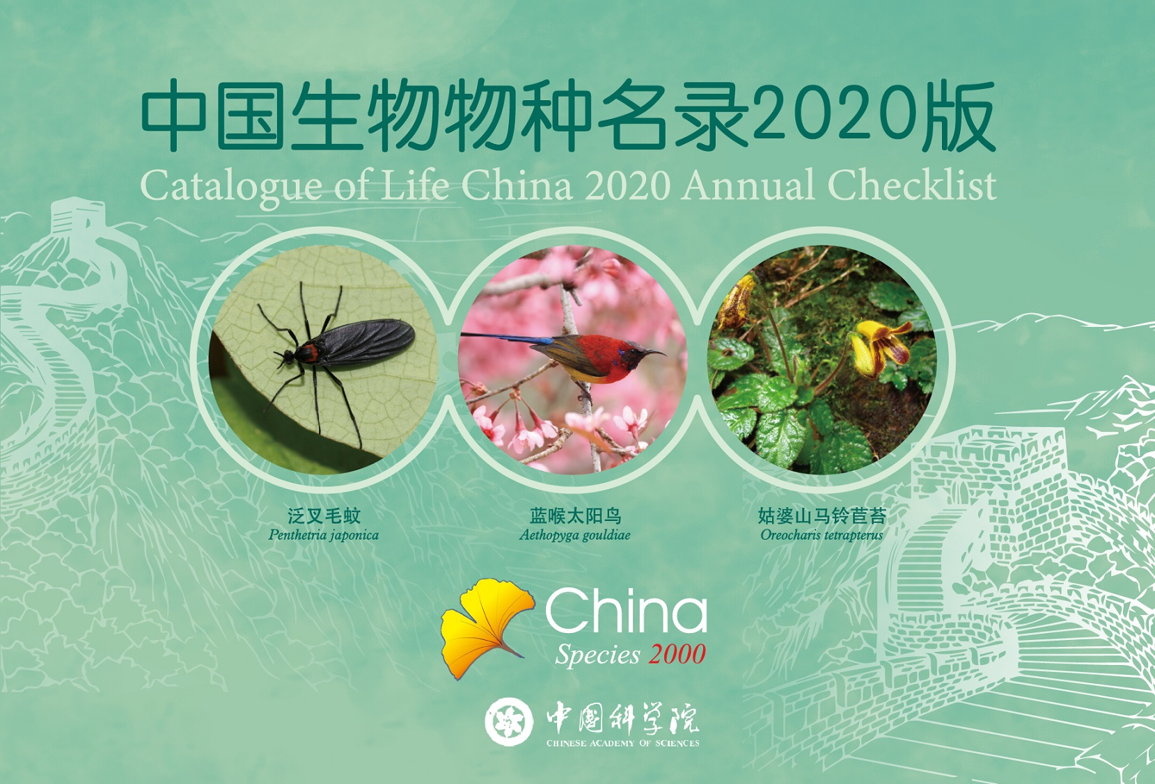 New species published by Gesneriad Conservation Center of China (GCCC): Oreocharis tetrapterus F.Wen, B.Pan & T.V.Do appear on the cover page of 2020 Annual Checklist of CoL-China